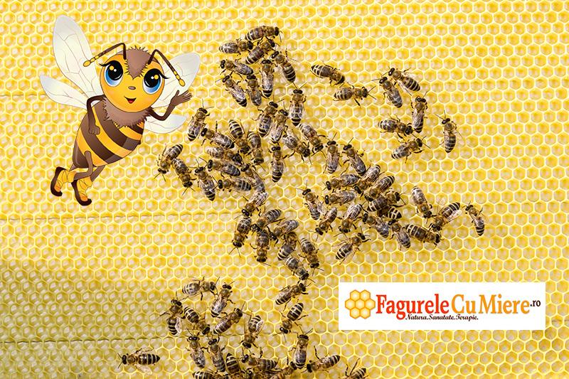 Albinutele construiesc fagurele pentru miere