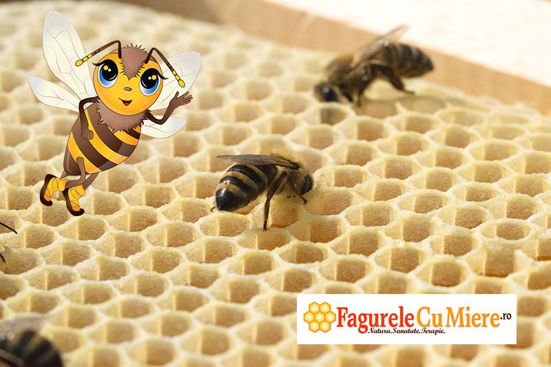 Albinutele au terminat de construit fagurele