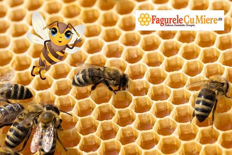 Albinele depun miere in fagure