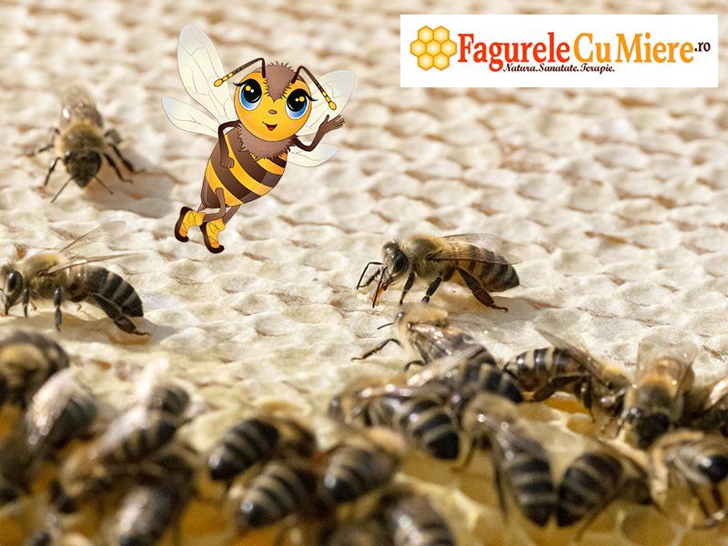 Capacirea (sigilarea) fagurelui plin cu miere