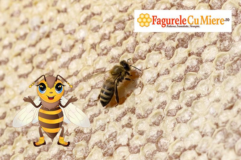 Fagure plin cu miere si capacit