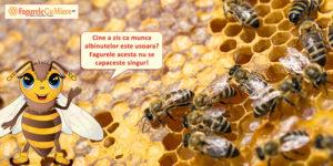 Invitatie la casuta albinelor