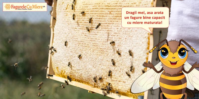 Delicii in dulapiorul albinutelor