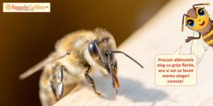 Mierea de amorfa si zborul deasupra florilor