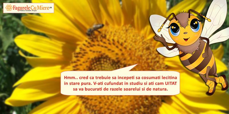 Mierea de floarea soarelui si testele de la scoala
