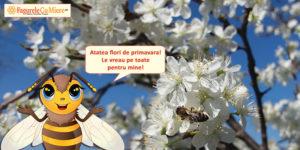 Albinutele si florile de mai