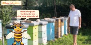 Calendarul apicultorului